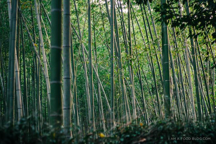 ARASHIYAMA, THE BAMBOO FOREST.