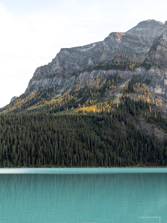 Banff Taste for Adventure - Larch Trees - www.iamafoodblog.com