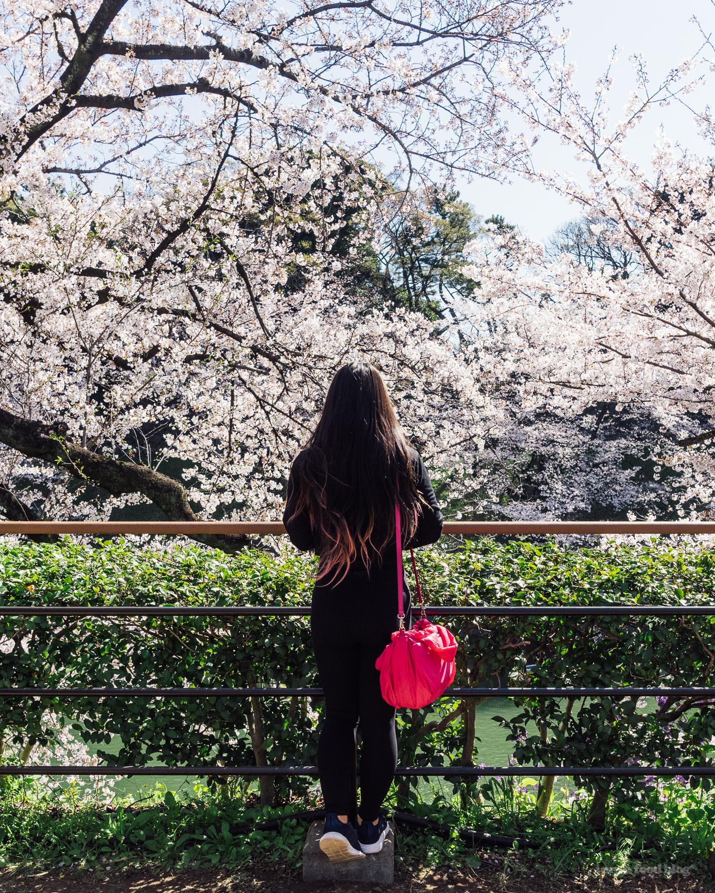 Sakura Season in Tokyo Guide | www.iamafoodblog.com